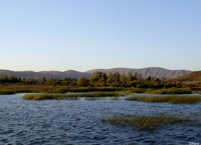 камыш в устье хариузовой реки