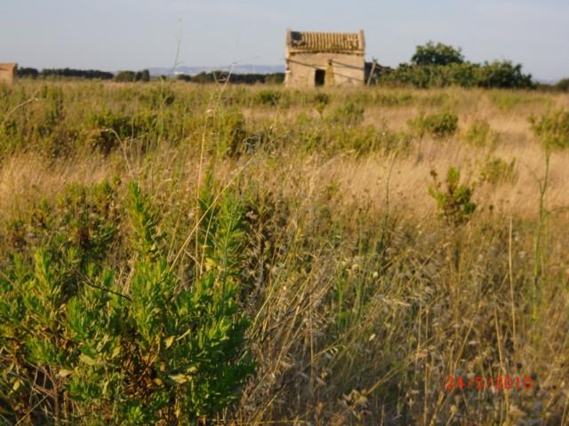 На  полевой дороге от отеля до поселка