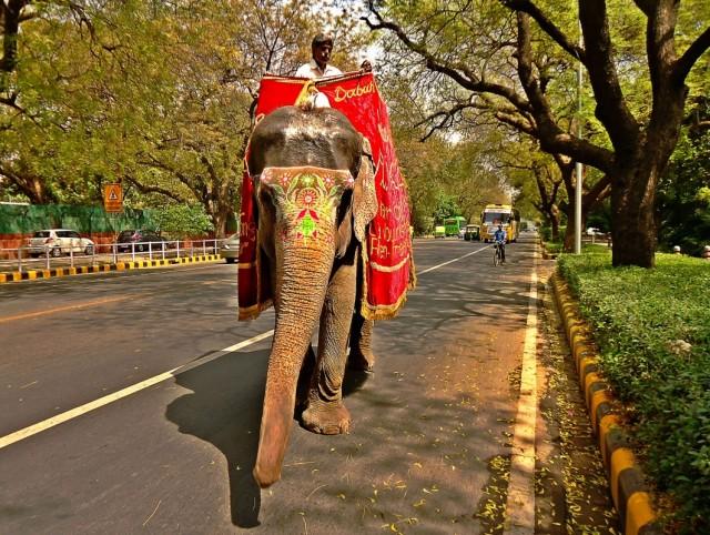 вчера днем по пути с Defence Expo в парк встретил слона на Акбар роуд