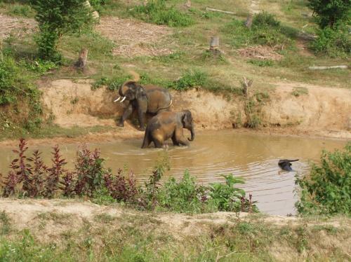 Купание слоников.