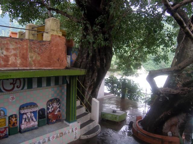 Священное дерево пипал (бодхи), за ним поворот и святая -святых - комната Бабаджи.
