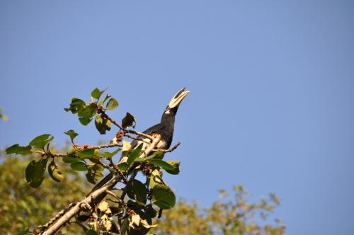 диковинная птичка