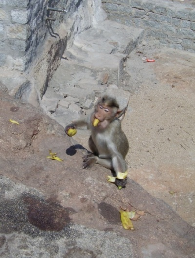 Эта жадина пыталась взять банан еще и ногой - поэтому запечетлена в момент падения