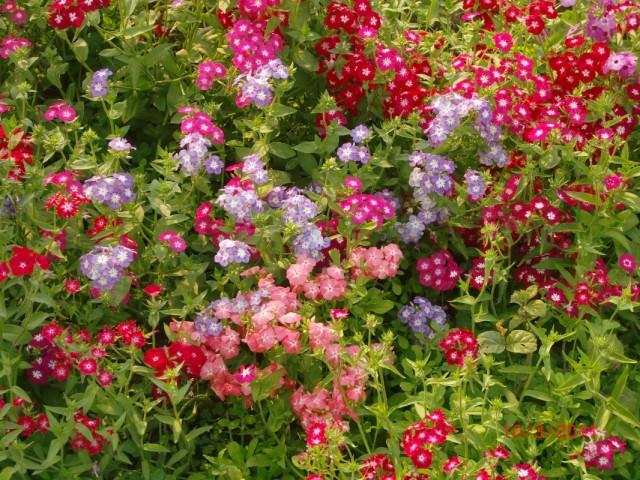 Сады Лоди 5