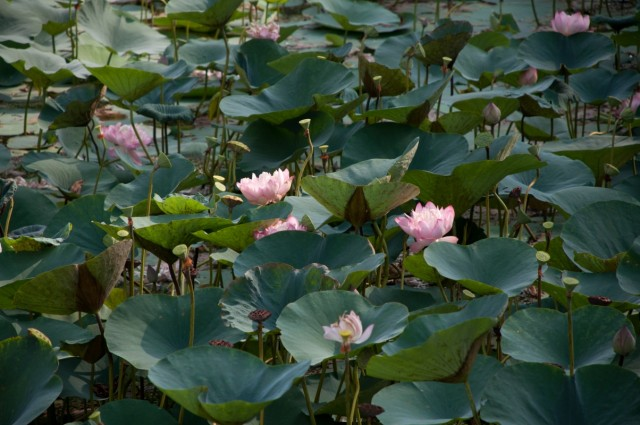 Ботанический сад-место,в которое хочется возвращаться снова и снова!