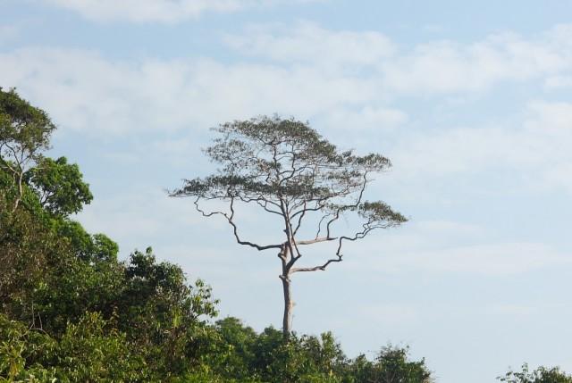 дерево-молния