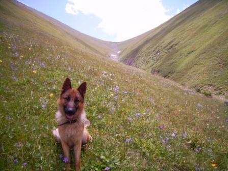 Рубин (мой пес)