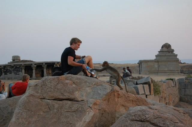 Банда обезьян на закате обчищает туристов