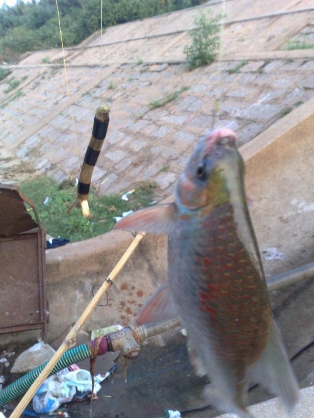 улов рыба переливалась всеми цветами радуги