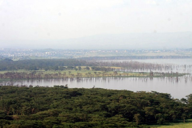 мертвые деревья - бывшая граница озера