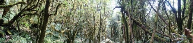 «Сказочный лес»