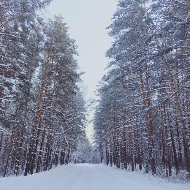 Алтайский бор - хвойный лес