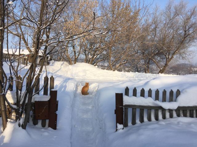 Сибирская глубинка. Алтай в январе
