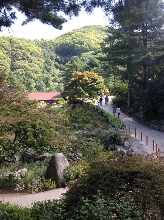 Сад утреннего спокойствия 5