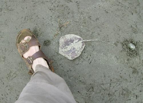 Смотрите под ноги!