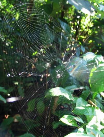 Паутина поймала звуки леса, превратившиеся в свет и радугу.