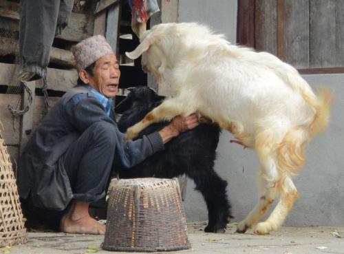 Бадалбисауна, округ Ламджунг, Непал