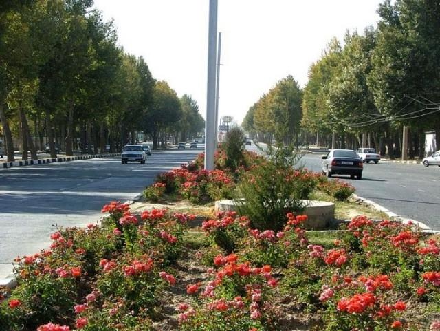 Розовая аллея по всему Душанбе