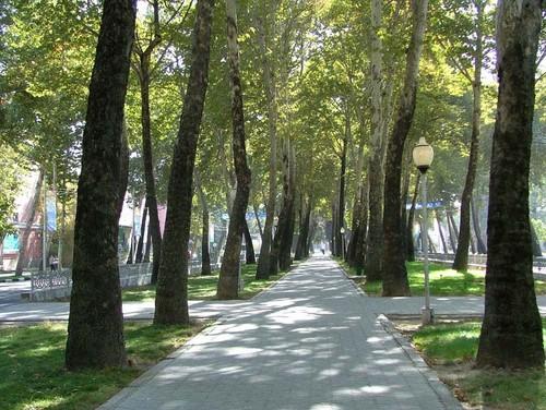 Чудо юда города Душанбе. Аллея чинар в 4 ряда проходит по всему центру. Ул Рудаки.