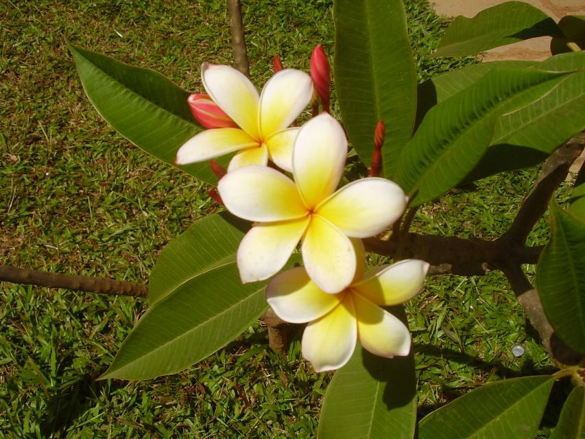 http://www.indostan.ru/forum/foto-video/7931/153493_5_o.jpg