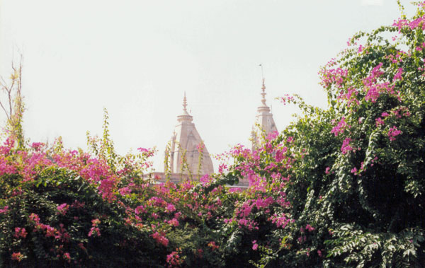 Вриндаван в цвету