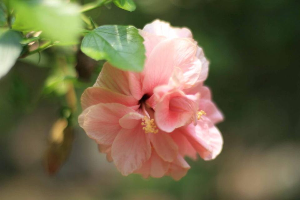 Цветы индии картинки 6