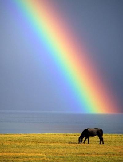 Радуга и лошадь