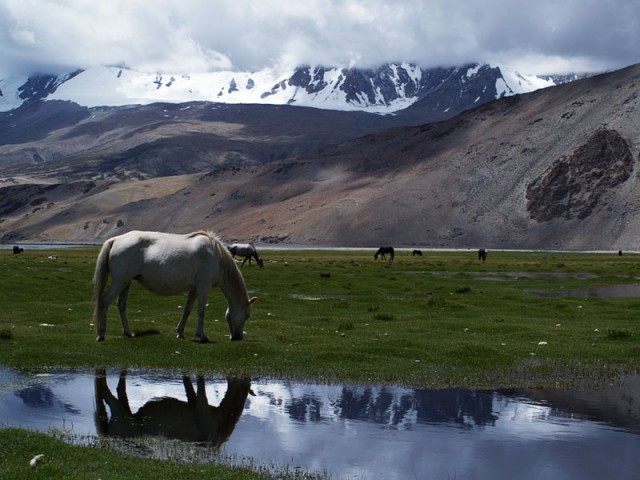 """Лошади пасутся во """"влажных землях"""""""