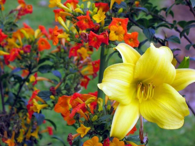 Цветы Кодайканала источают богатый аромат