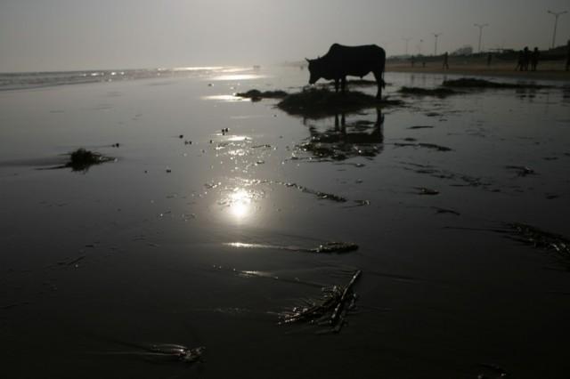 Корова на берегу