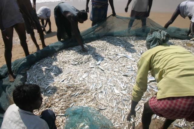 Добыча рыбаков