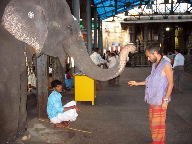 Встреча со слоном в Шри Калахасти