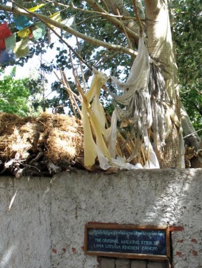 То самое дерево, проросшее из посоха Рингчена Зангпо