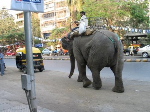 Слон и мотик