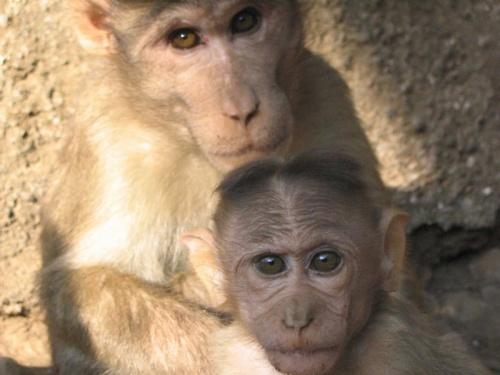 Мадонна с маладенцем