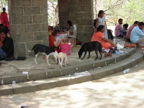 Индусы выбираются туда исключительно на пикник