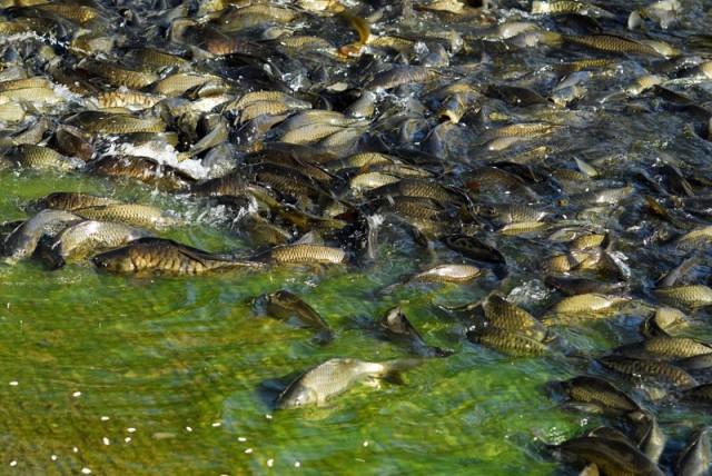 рыбки с печенюшками)