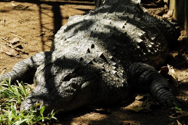 питомник крокодилов