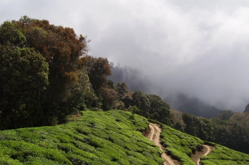 Топ Стейшн - в погожий день оттуда прекрасный вид на Тамил-Наду. У нас был прекрасный вид на облако :-)