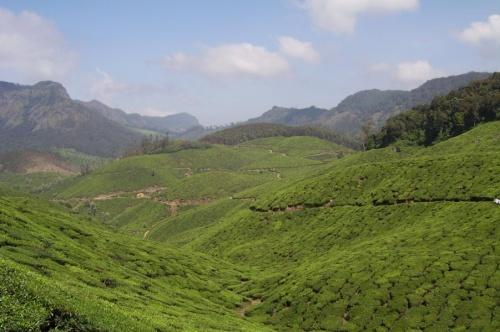 Еще чайные плантации