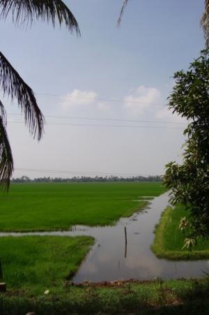 Рисовые поля - буквально в двух метрах от воды, чуть ниже уровня озер