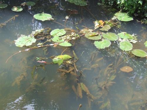 вода в канале