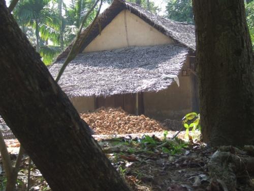 а тут перерабатывают кокосы