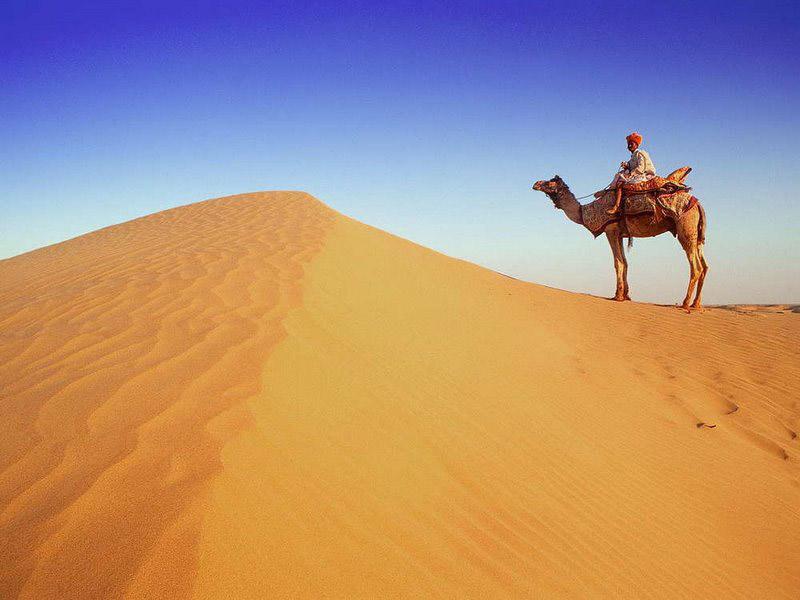 Верблюд в пустыне.  Раджастан Индия, фотография фотообои фото обои.