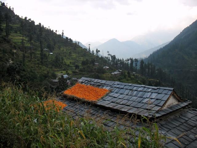 В сентябре в долине повсюду видишь эти ярко-оранжевые пятна кукурузы