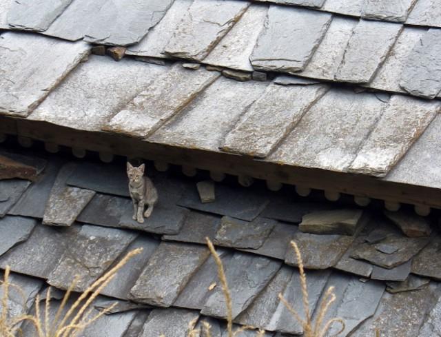 Тише, мыши, кот на крыше