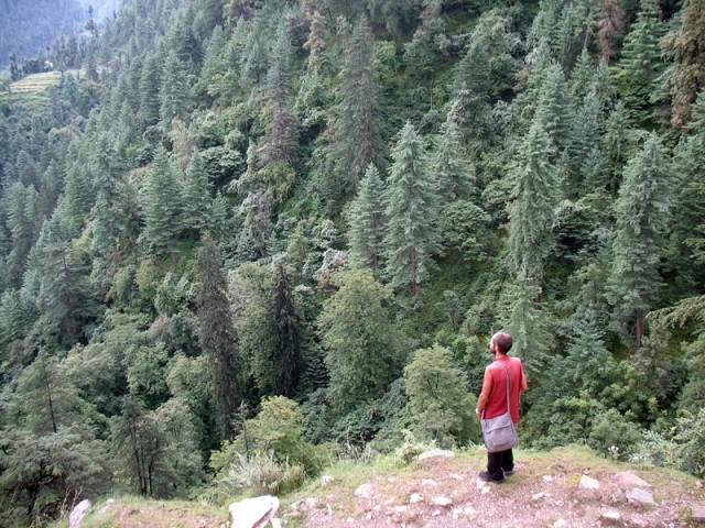 Гималайский лес, окрестности Джиби