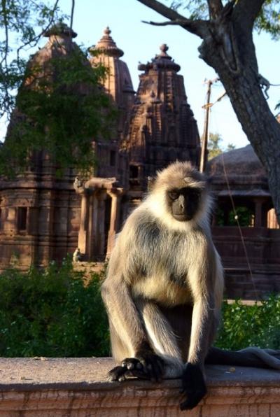 После заката сады принадлежат обезьянам. Мандор