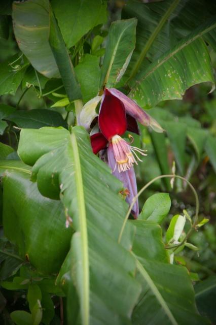http://www.indostan.ru/indiya/foto-video/3382/5961_1_o.jpg