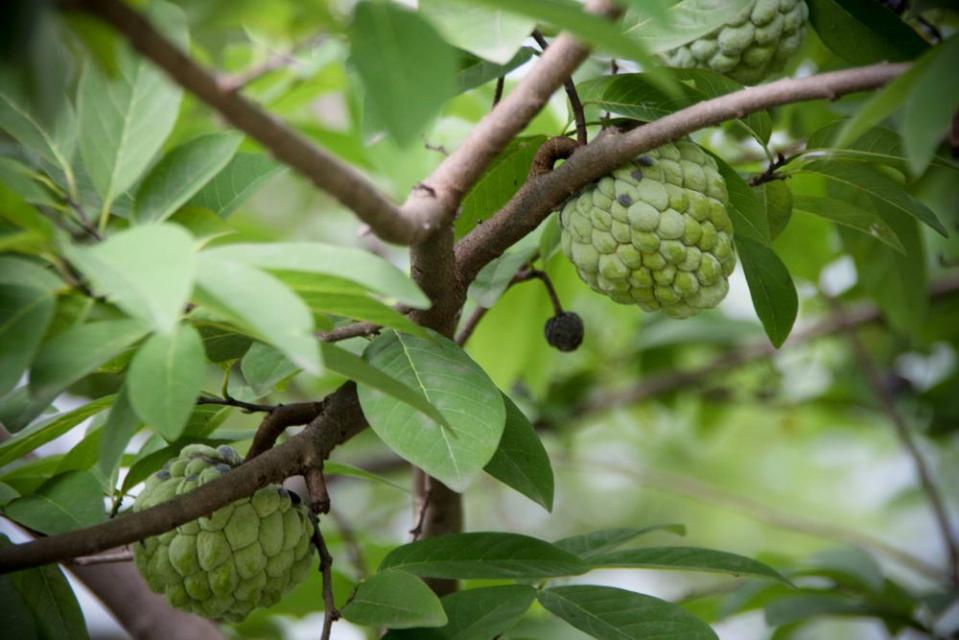 http://www.indostan.ru/indiya/foto-video/3382/5962_2_o.jpg